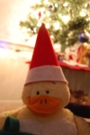 Ducky with SantaHat
